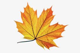 Resultado de imagem para imagens frutos de outono