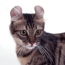 「猫」の画像検索結果