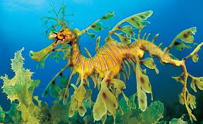 Image result for picture of sea dragons