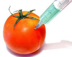 Image result for images gmo foods