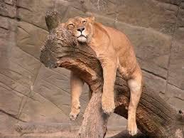 תוצאת תמונה עבור עייפות