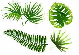 <b>Tropical plant leaves</b> set. <b>monstera</b>, fern, palm, yucca. Vector | Free ...