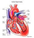 Images & Illustrations of cardiac