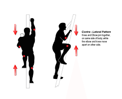 contra lateral versaclimber versaclimbers that come standard contra lateral movement pattern are as follows <br