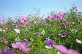 Small Picture Garden Design Garden Design with Wildflowers on Pinterest Wild