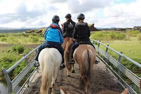 Tolt - Review of Islenski Hesturinn, The Icelandic <b>Horse</b> - <b>Riding</b> ...