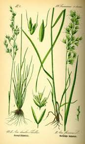 EUNIS -Factsheet for Hercynio-Carpathian [Agrostis alpina ...