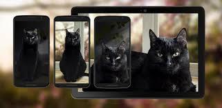 Cute <b>Black Cat</b> Live Wallpaper - Apps on Google Play