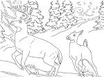 Раскраски олени распечатать бесплатно