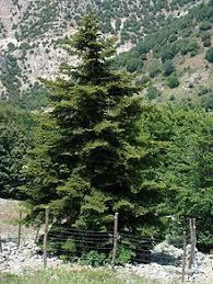 Anexo:Flora endémica de Sicilia