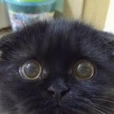 <b>Прелестный кот</b> Гимо с огромными глазами | Милые котики ...