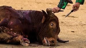 EU-parlamentet vill stoppa miljardbidrag till tjurfäktning | SVT Nyheter