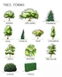 51 Best Architectural <b>Plants</b> images | Landscape, Landscape <b>design</b> ...