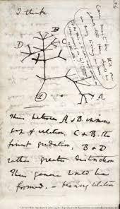 Darwin Online: Darwin's notebooks on geology, transmutation ...