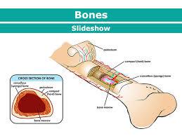 Your <b>Bones</b> (for Kids) - Nemours KidsHealth