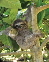 <b>sloth</b> | Definition, Habitat, Diet, & Facts | Britannica