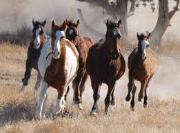 Equine Inspired Coaching - Horse Herd On The Run