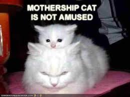 Grumpy Cat   Know Your Meme via Relatably.com