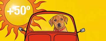 Bildresultat för hund i bilen varmt