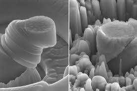 UCLA researchers create exceptionally strong and lightweight <b>new</b> ...