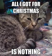Chronically Depressed Cat memes   quickmeme via Relatably.com