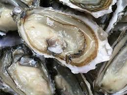 """Résultat de recherche d'images pour """"huîtres"""""""