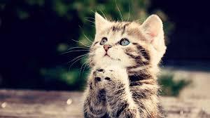 可愛貓的圖片搜尋結果