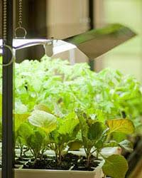 How to Choose an <b>LED Grow</b> Light   Gardener's Supply