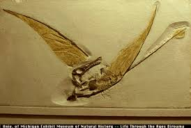 Rhamphorhynchus  The Rhamphorhynchus group of pterosaurs had sharp teeth and most had long tails  Some species  as this one  had short  diamond shaped  quot      Estrella Mountain Community College
