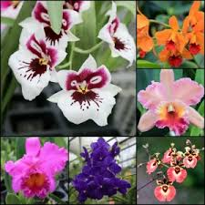 photo essay hawaiian grown orchids  greener on the inside  hawaii orchid collage