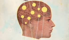 How <b>men's</b> and <b>women's</b> brains are different   Stanford Medicine