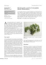 (PDF) Phytodermatitis caused by Ceratocephalus falcatus ...