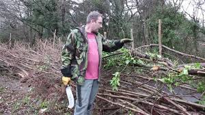 england style steps: traditional hedge laying in the south of england style