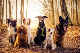 Image result for border collie in autumn pix