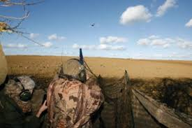 Image result for pigeon shooting hide in use