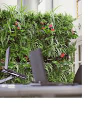 simple indoor green wall with various plants beside the stairs and wooden flooring for best amazing office plants