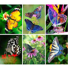 Online Shop <b>AZQSD Diamond Painting</b> Butterfly Picture Of ...