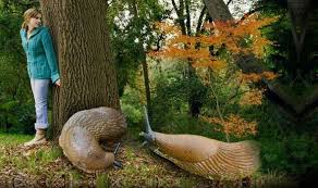 Image result for Slugs