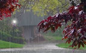 Image result for rain in autumn