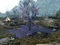 Lore:<b>Sleeping Tree</b> - The Unofficial Elder Scrolls Pages (UESP)
