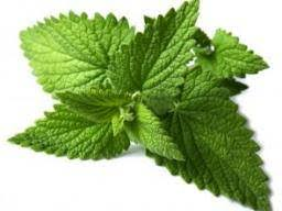 <b>Mint</b>: Benefits, diet, risks, and nutrition