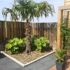 Afbeeldingsresultaat voor palmbomen in nederland