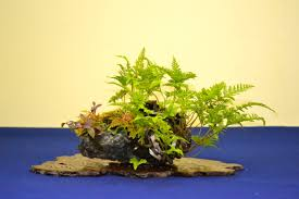 Image result for kusamono
