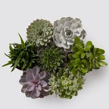 <b>Succulent</b> Plant | Indoor Plants in London | Indoor Plants in London ...