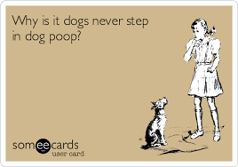 Image result for funny step in dog poop