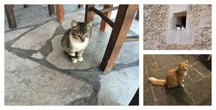 Αποτέλεσμα εικόνας για cats restaurants greece