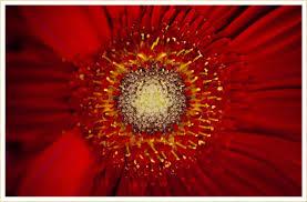 40 Types of <b>Red Flowers</b> - FTD.com