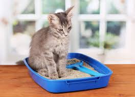 here are five tips from the trenches on how to maximize kitty litter longevity and ensure that your cat house stays smelling its best cat litter box