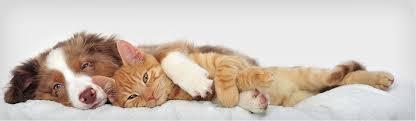 <b>Loving Pets</b> Singapore   Affordable <b>Pet</b> Groomer East   Cheapest ...