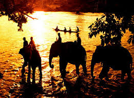 Image result for buon ma thuot elephants in the sunset